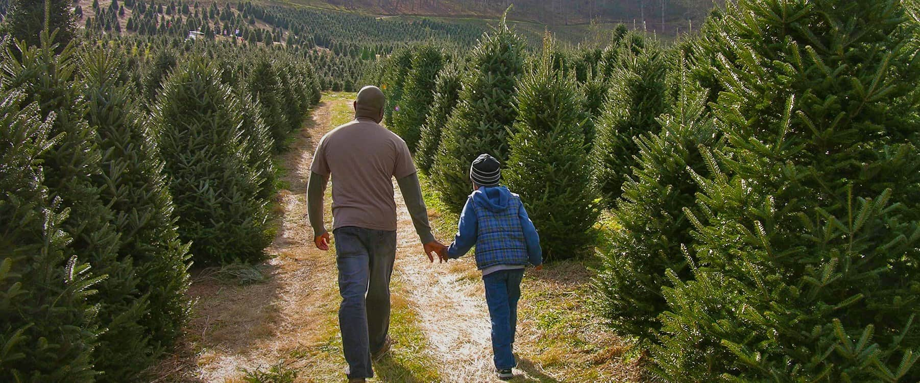 christmas-tree-farms-in-haywood-co