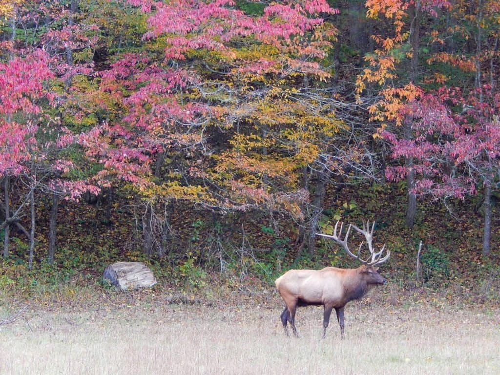elk fall - Esther Blakely - Cataloochee Valley Tours