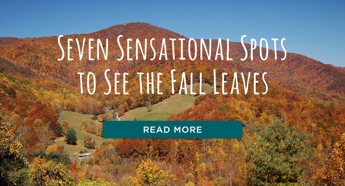 7 Spots to see Fall Leaves