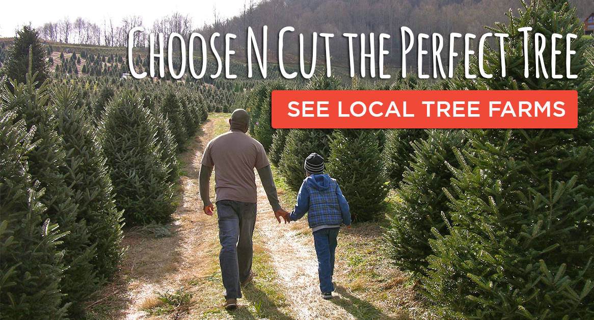Choose N Cut your christmas tree at these tree farms