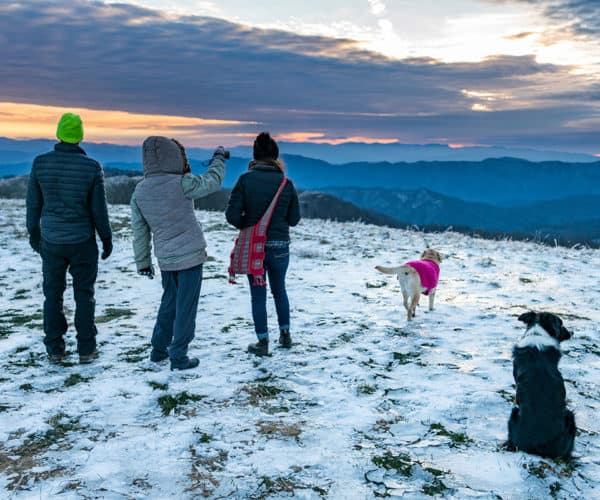 Family and dogs hiking Max Patch during the winter.