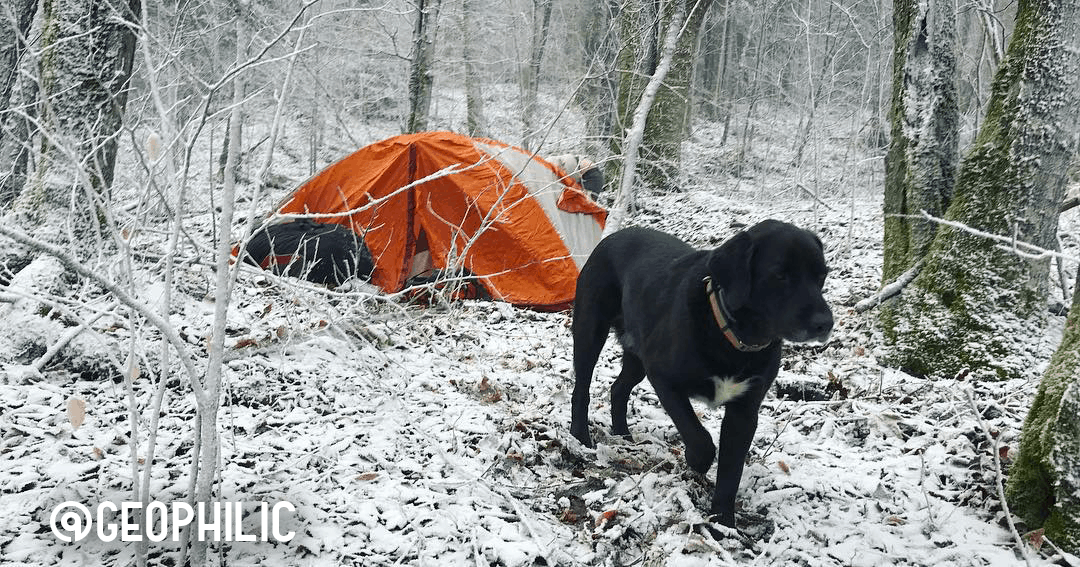 A dog emerging from a ten following a night of winter camping at a snow-covered campsite.
