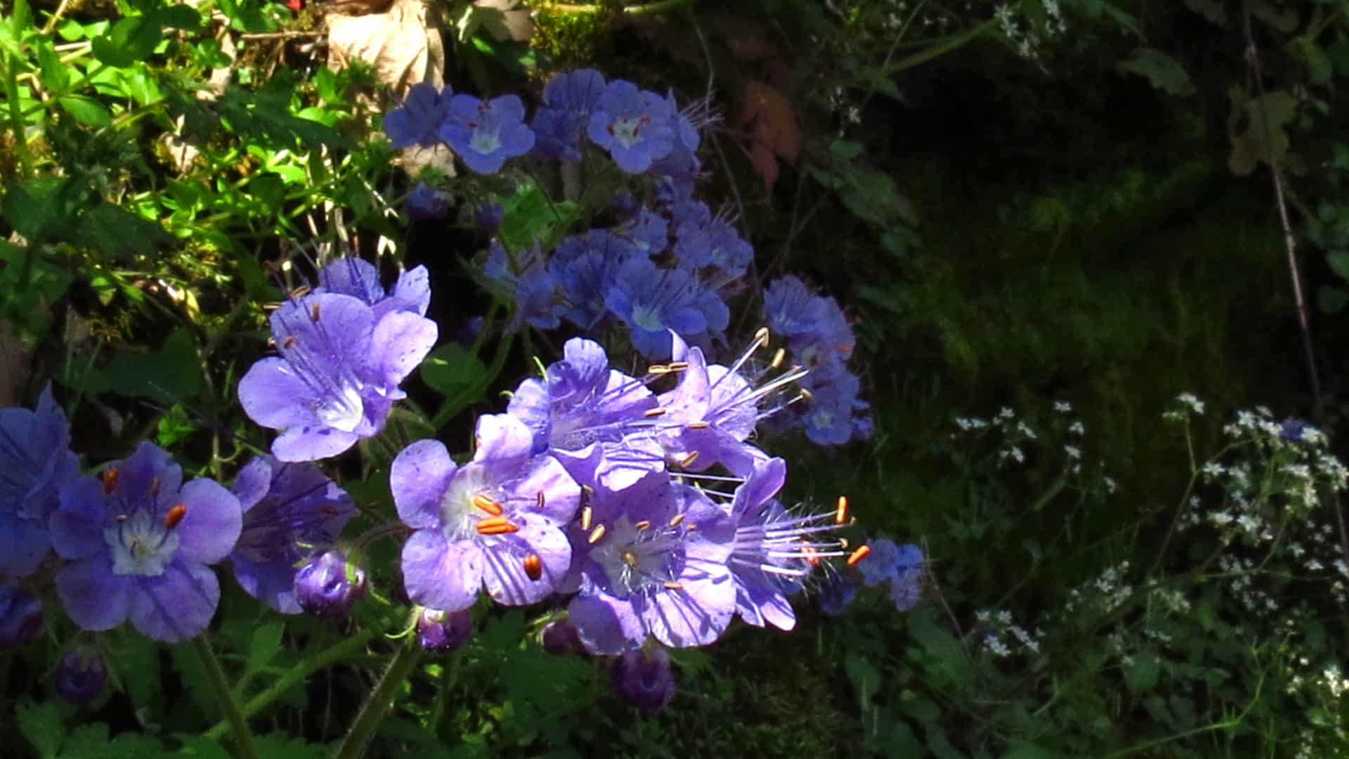 Wild Flowers To Wild Waters Hike In The Nc Smokies