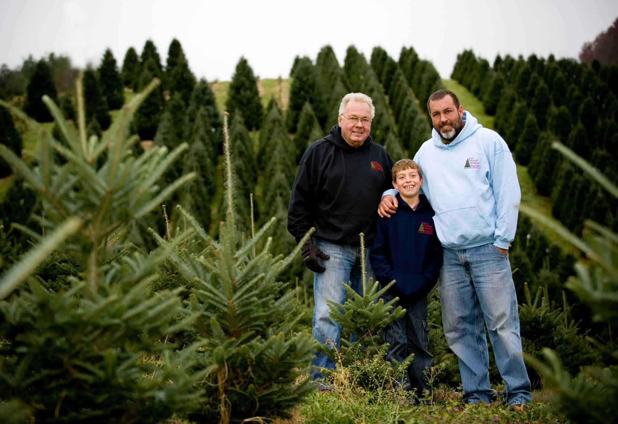Boyd Mountain Christmas Tree Farm Cut Your Own Christmas Tree