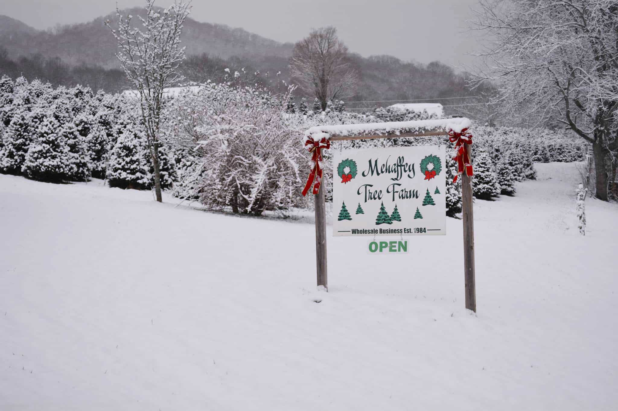 Mehaffey Tree Farm in the snow