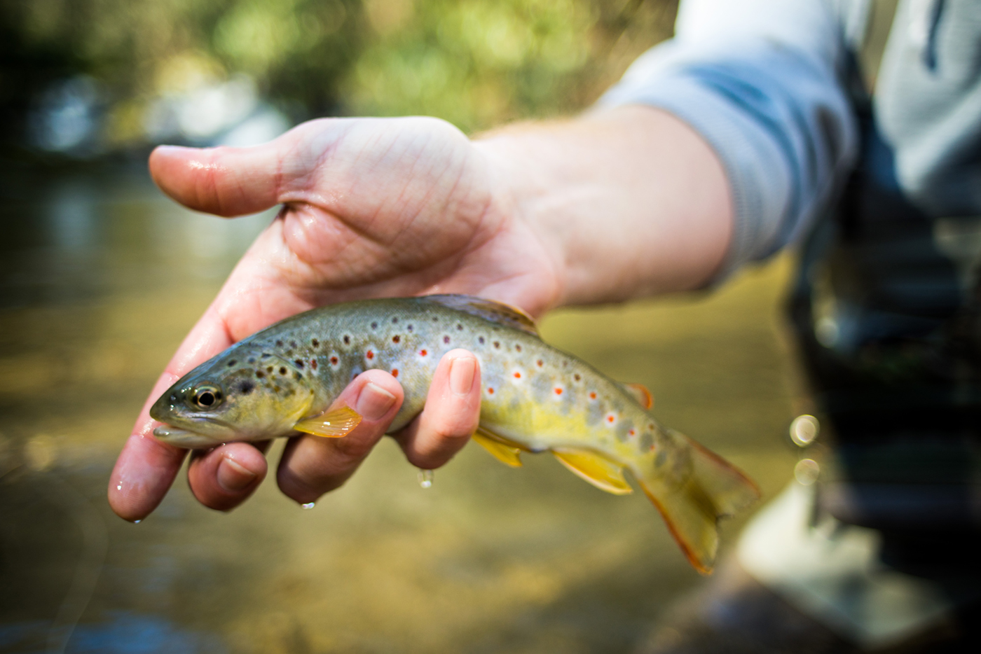 Mountain Heritage Trout Waters Trout Fishing In North