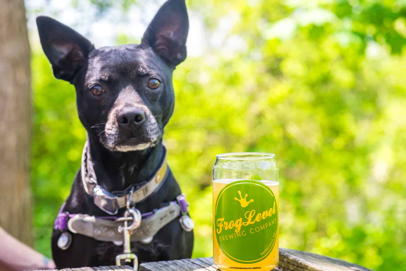 dog in brewery