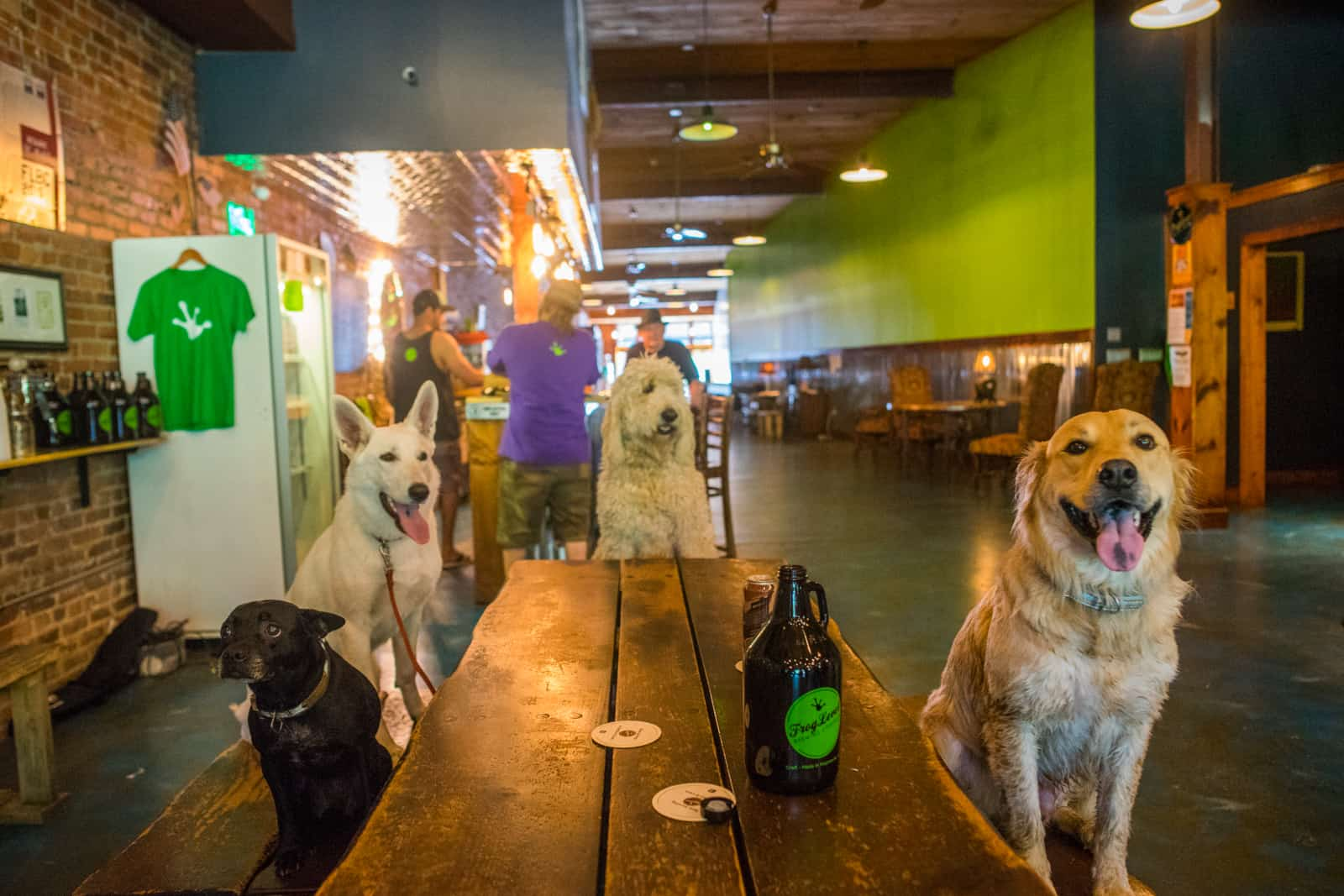 dogs in frog level brewery