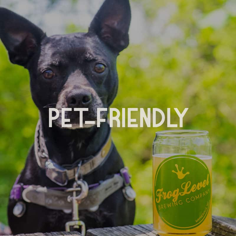 pet-friendly-vacations