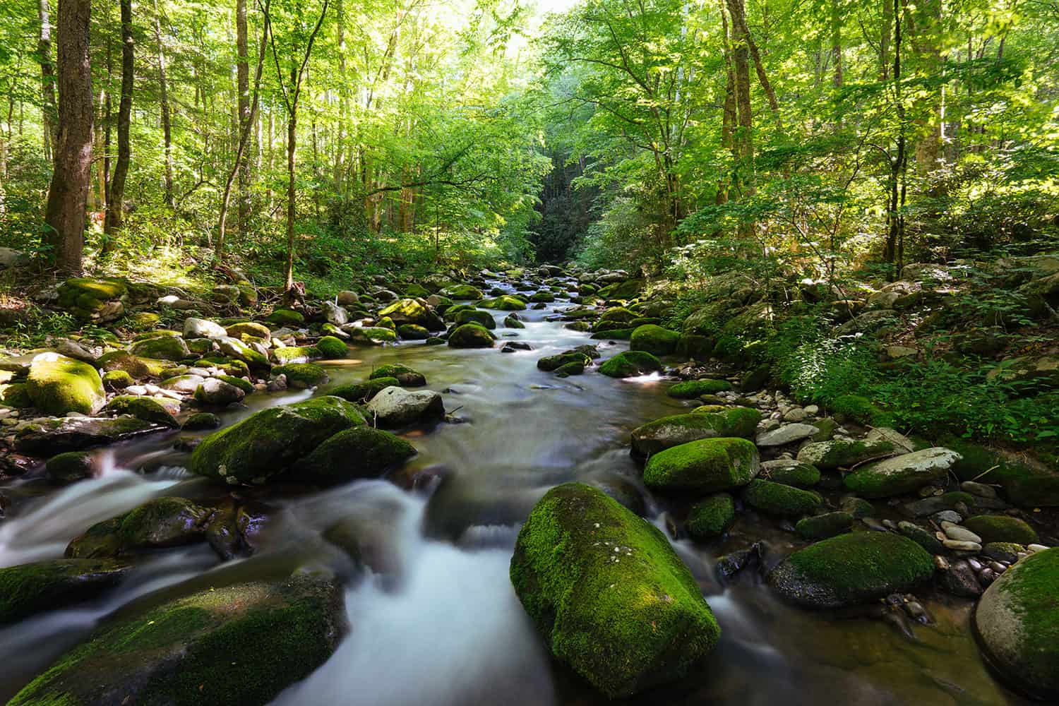 Huckberry Great Smoky Mountain National Park Insider S Guide Kyle Frost Creek Visit Nc Smokies