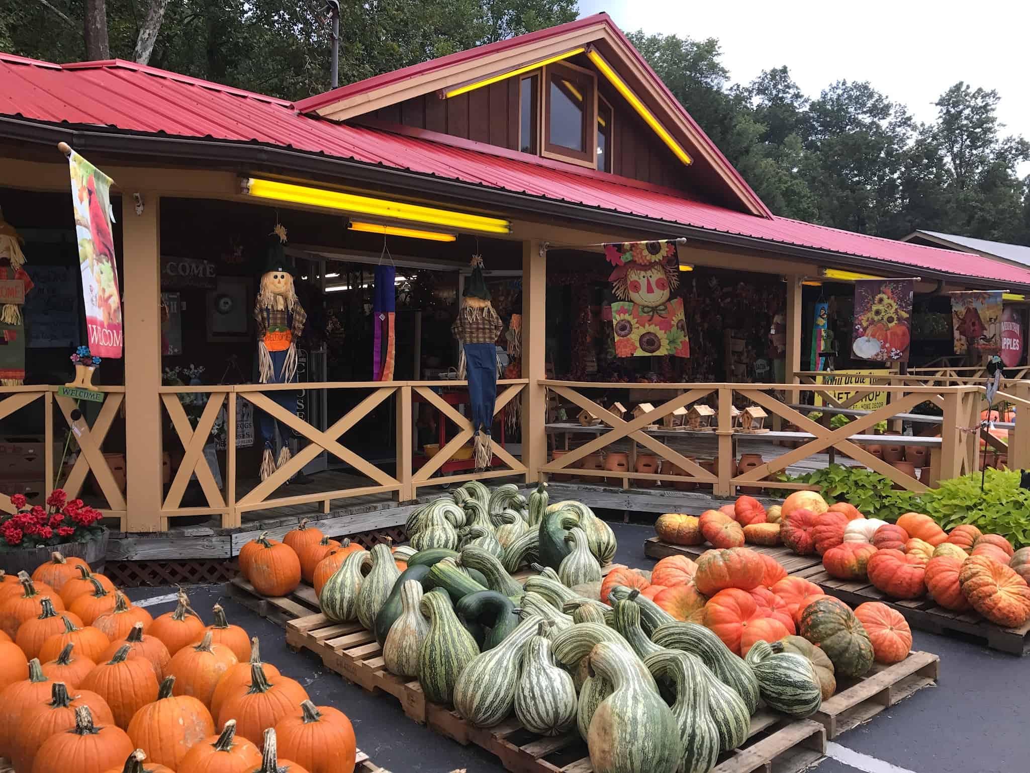 where to pick a pumpkin visit nc smokies