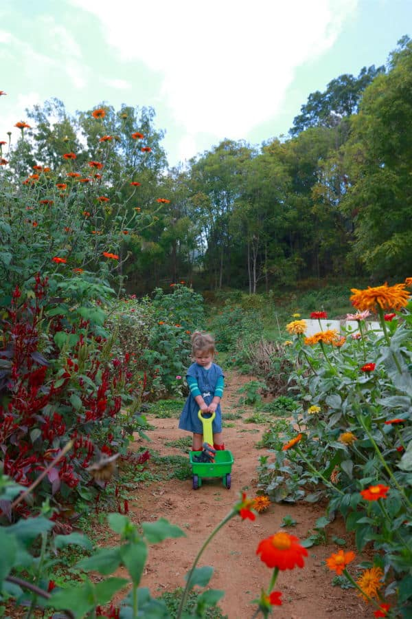 upick-flower-farm