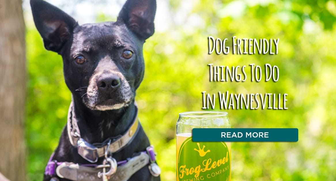 Dog friendly things to do in Waynesville
