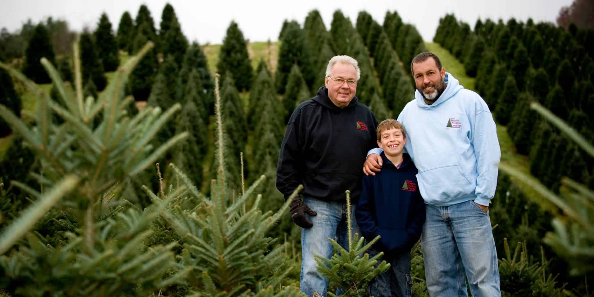 Boyd Mountain Christmas Tree Farm in Haywood County