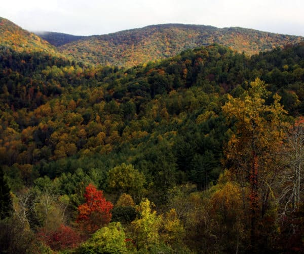 Fall in Haywood County