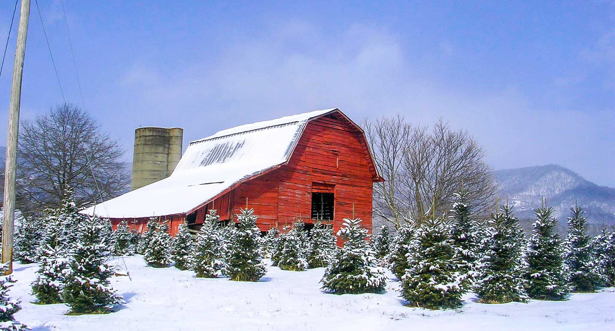 Smoky Mountain Christmas Tree Farm