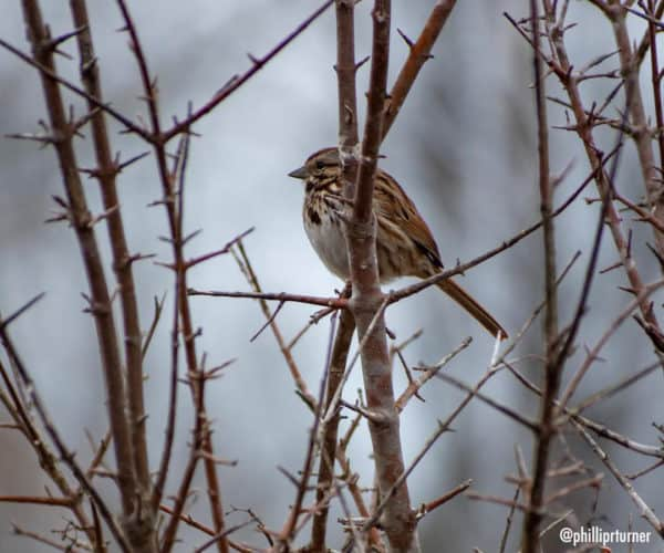 Bird in tree.