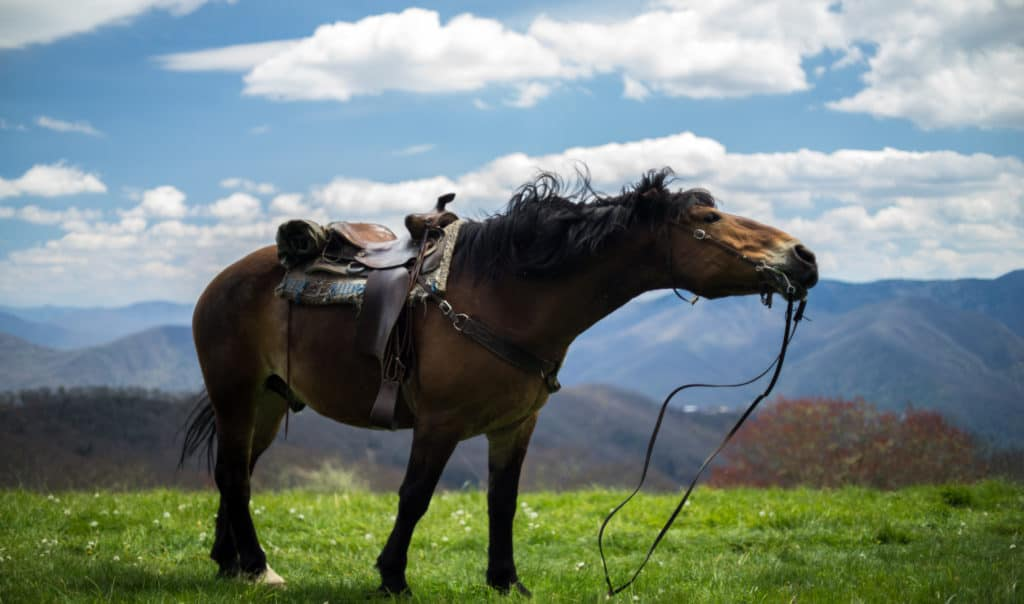 Horse geared up for a ride.