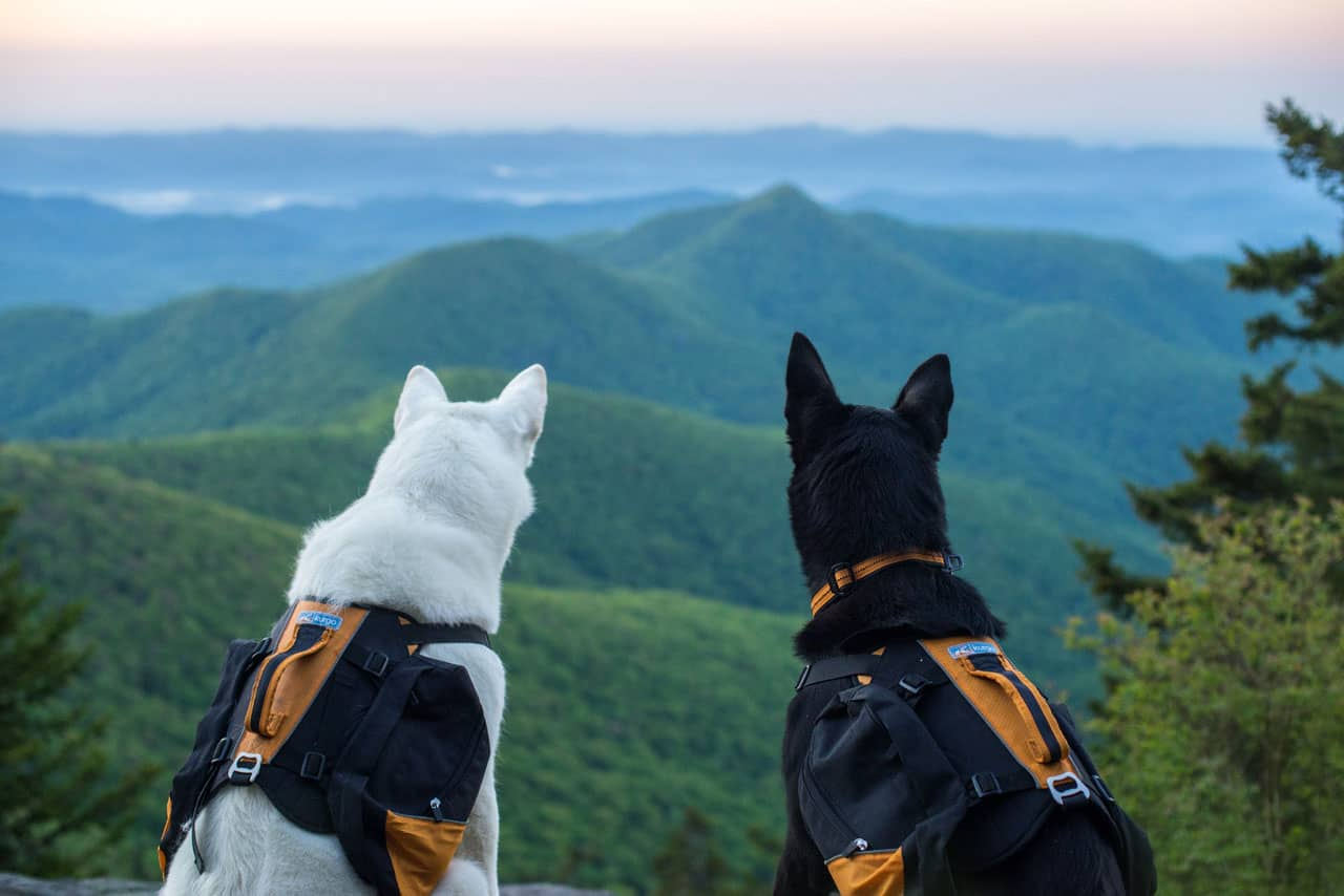two dogs in the nc smokies