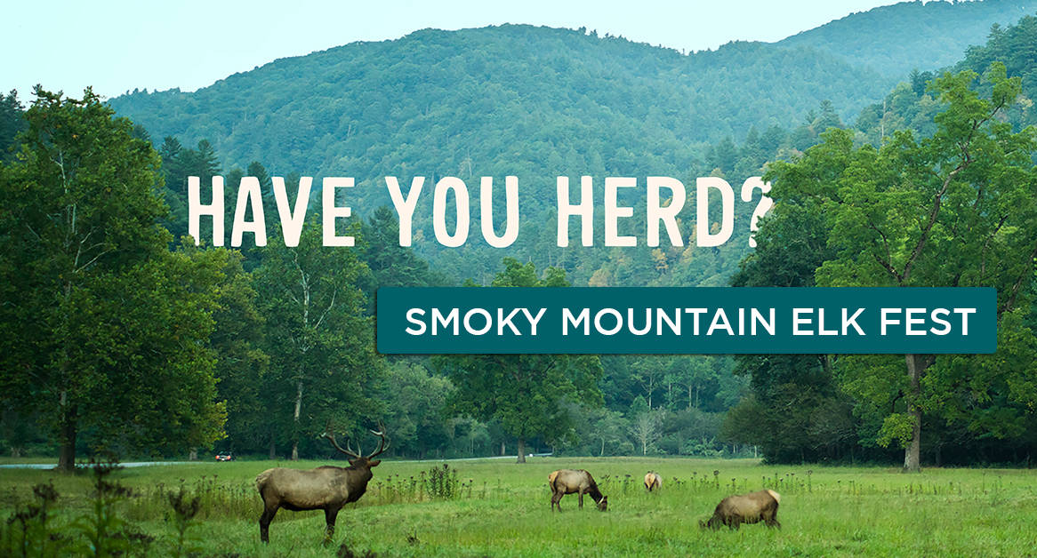 Learn more about Smoky Mountain Elk Fest