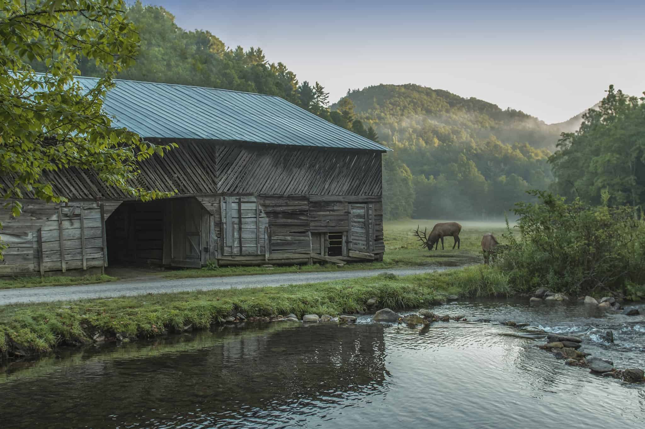 Elk grazing at Cataloochee Valley by an old barn | Photo by Roy Walter