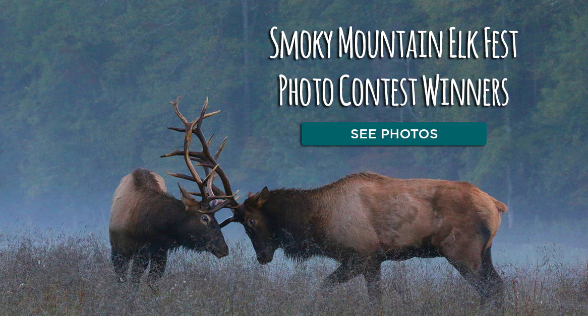 Click here to see the Smoky Mountain Elk Fest Photo Contest Winners