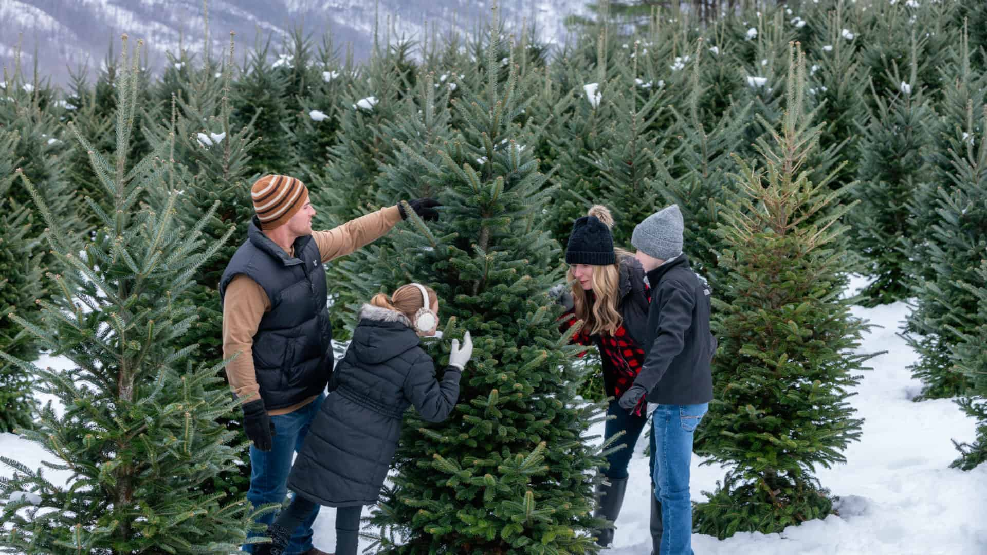 Choose N' Cut Christmas Trees | Holiday