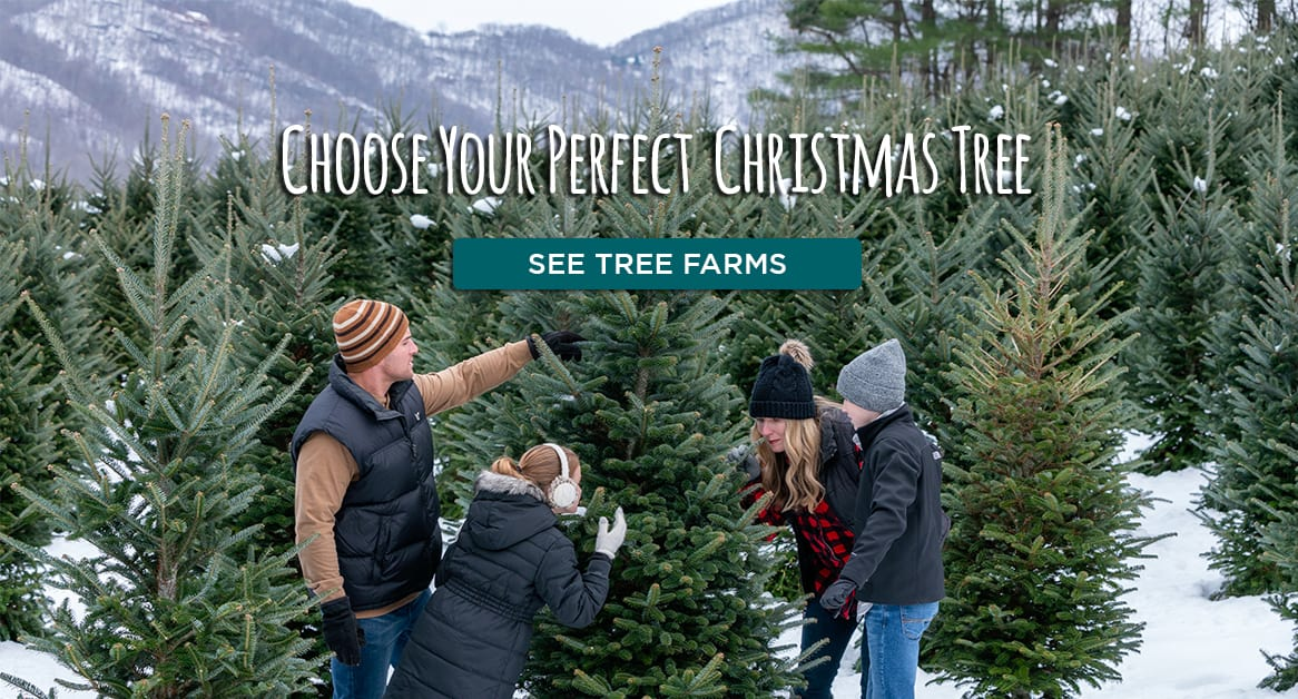 Choose your perfect christmas tree