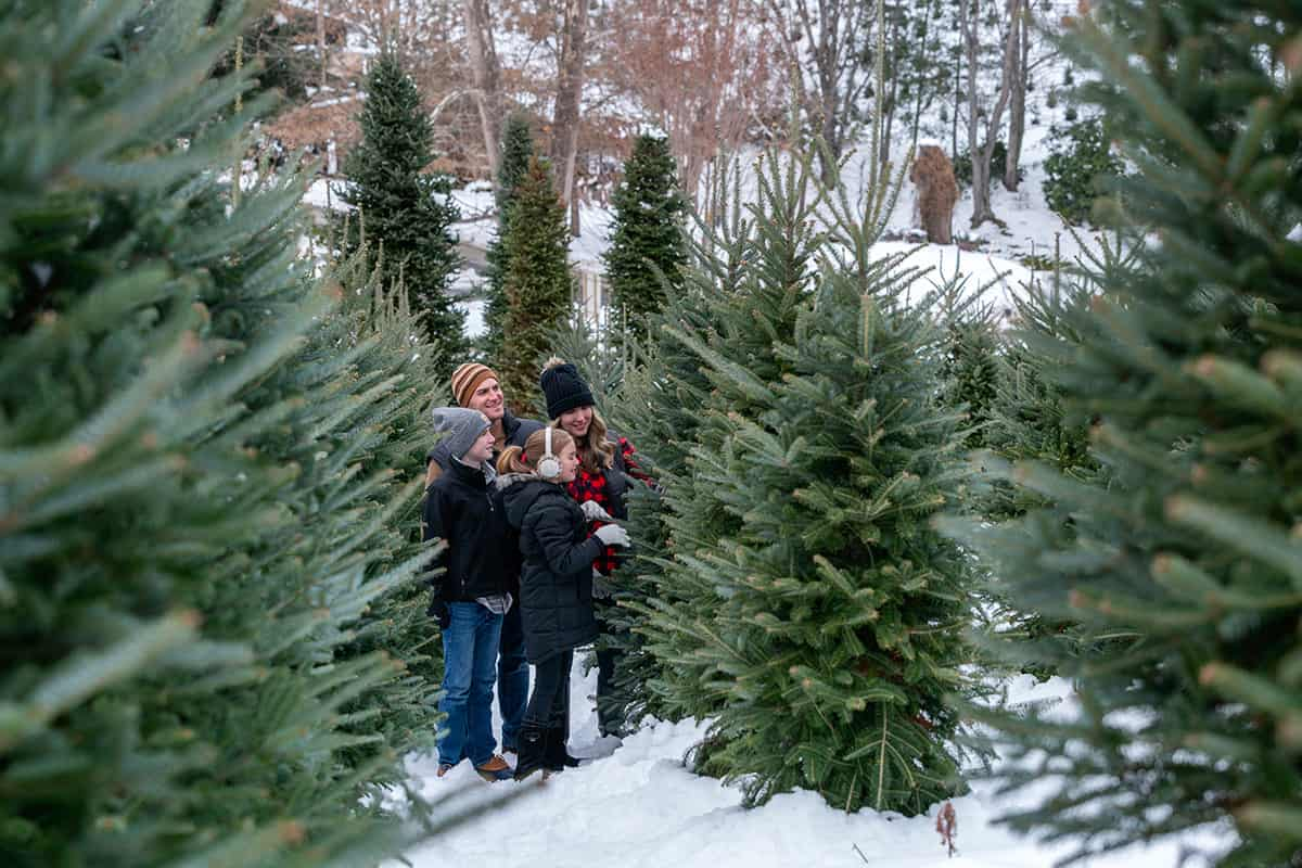 A family searching for their perfect Christmas tree on a snowy morning in Haywood County, North Carolina.