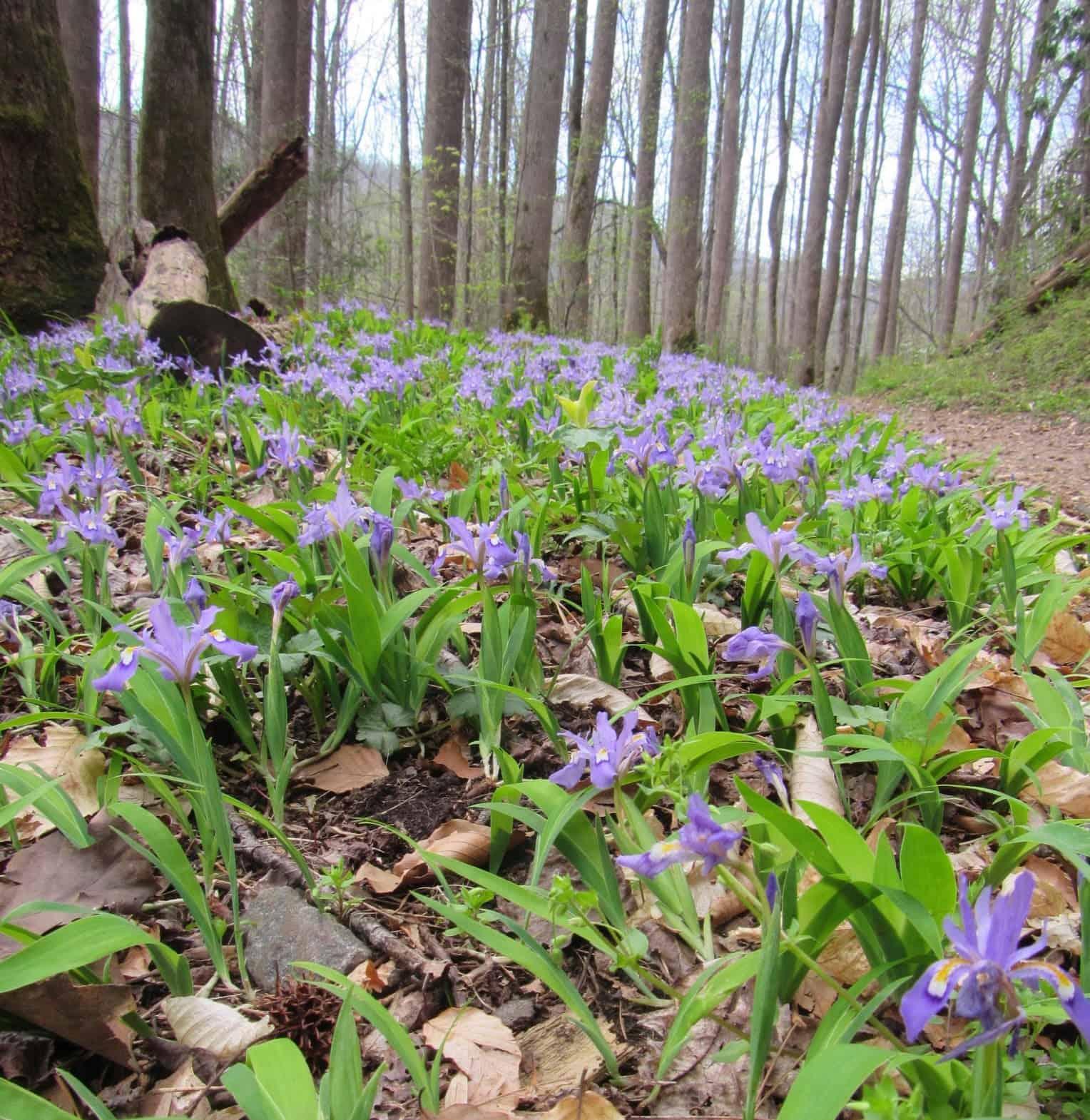 Haywood Waterways Spring hike